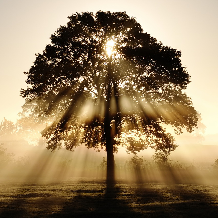 rays of light through a tree - a mindful picture